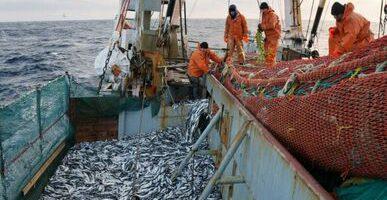 Лососевая путина — прогноз выполнен на 99%: на Дальнем Востоке добыто более 450 тыс. тонн тихоокеанских лососей