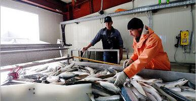 Российские рыбаки будут взвешивать уловы по-новому