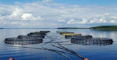 Страны ЕАЭС ставят задачу по устойчивому развитию аквакультуры