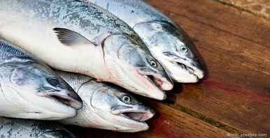 На Камчатке за время путины планируют выловить больше полумиллиона тонн лососей