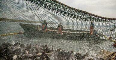 Российские рыбаки вышли на положительную динамику вылова: объем добычи превысил прошлогодний уровень