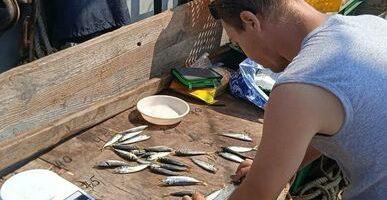Наука обновит данные о рыбах Черного моря