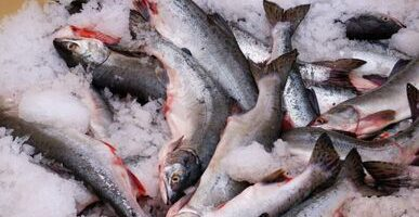 Холодильники Приморья забиты красной рыбой, цены в опте идут вниз