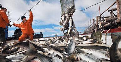Российские рыбаки добыли почти 3,2 млн тонн – динамика вылова растет