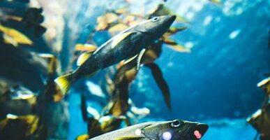 Обитатели морей вживую поучаствуют в питерской выставке