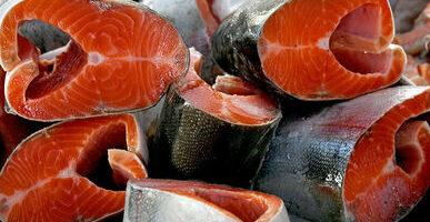 Россия полностью обеспечила себя лососем
