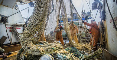 Приморский край – на втором месте по вылову рыбы на Дальнем Востоке